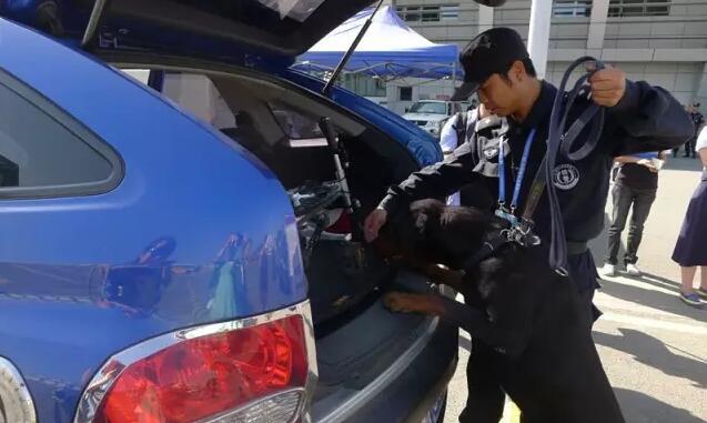 大型活动还有警犬检查